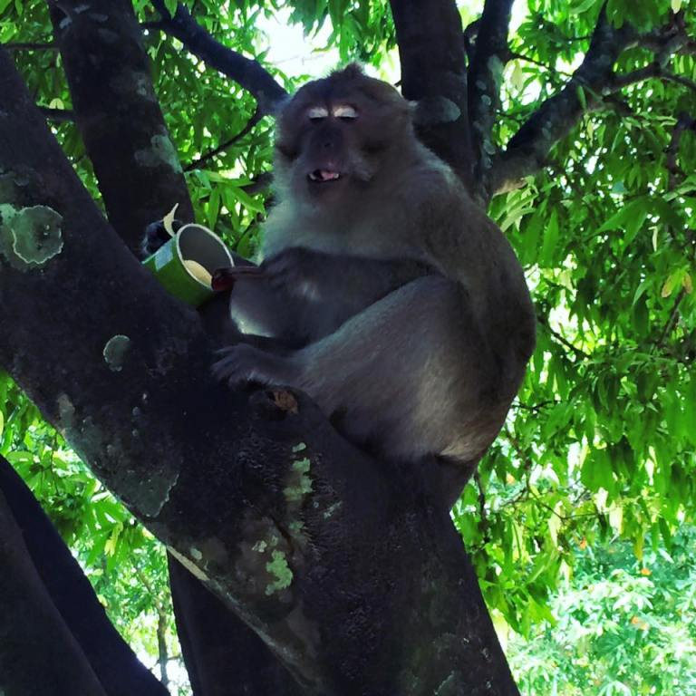 monkey that stole my chips